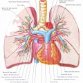 Vascolarizzazione del polmone