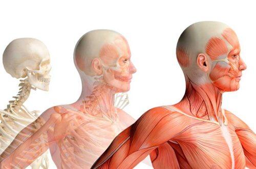 Organi cavi
